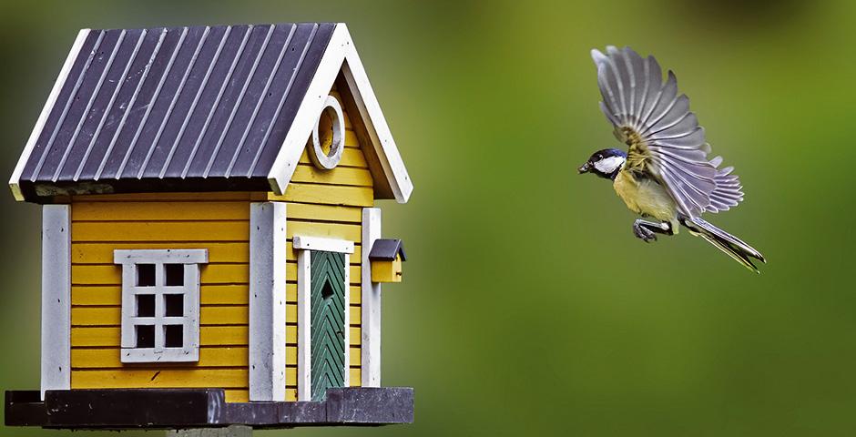Immobilie gesucht: Meise fliegt zum Vogelhaus