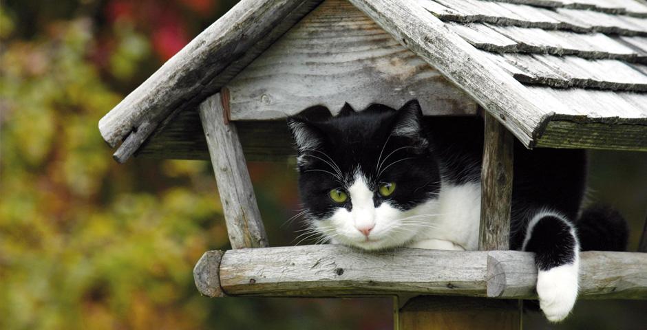 Mieter gesucht: Motiv Katz im Vogelhaus